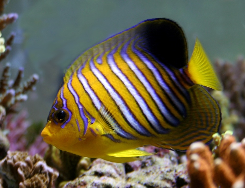 Korallrevsakvarie.